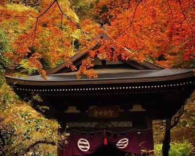 东京的诱惑 大东京自由假日五日游